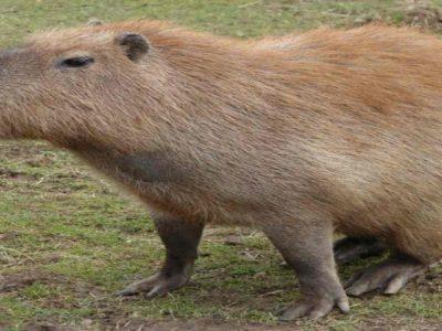 Weird animals as pets