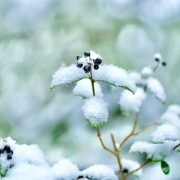 5 Essential Winter Gardening Tips