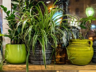 Caring For The Plants: