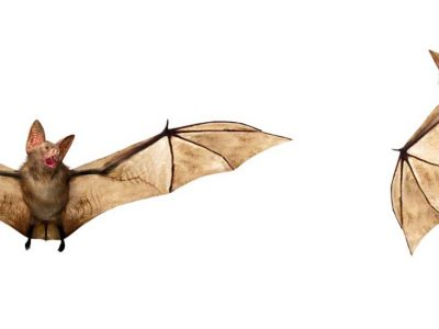 About Removing Bats