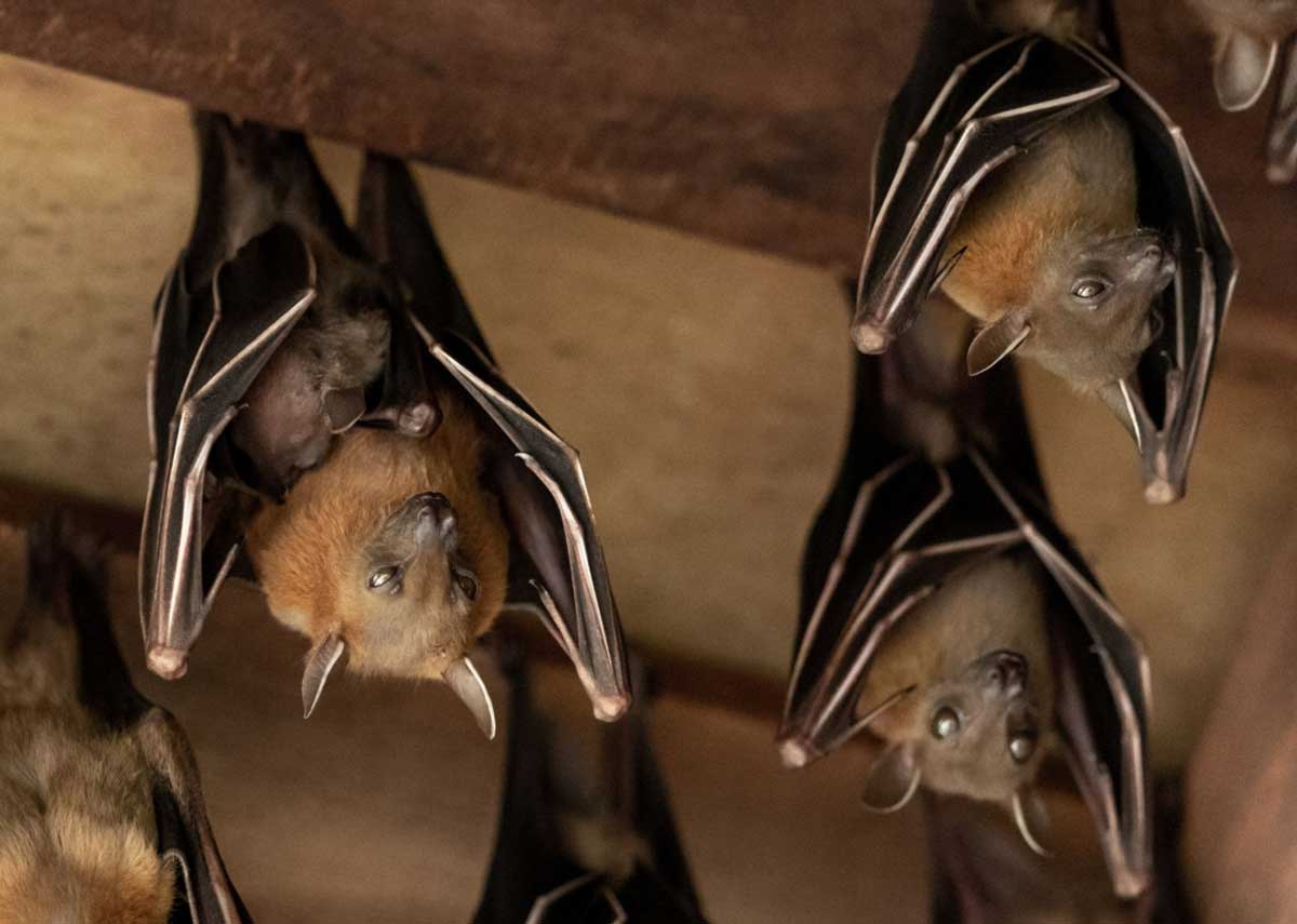 Removing Bats