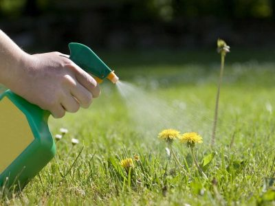 best weed killer for your Garden and Grass